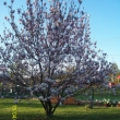 Kinga Trytko - Magnolia