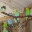 papugi4